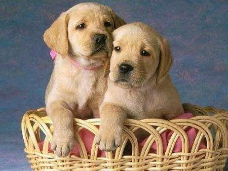 El perro ideal no tiene que tener pedigree, solo adaptarse a ti