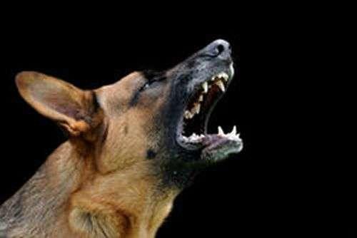 Consejos para evitar que el perro ladre