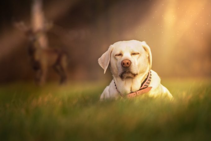 Sedante para perros