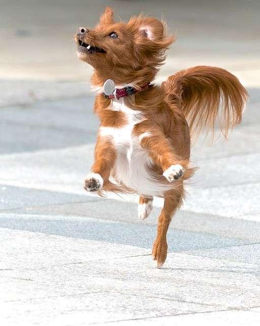 actividad-perros