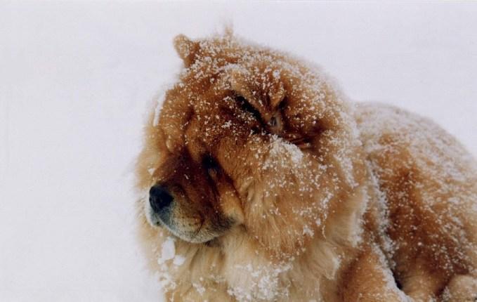 Perros de frío