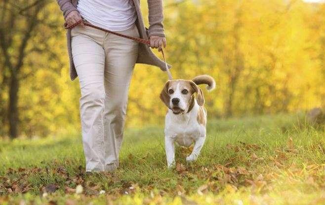 Perro paseando con su dueña