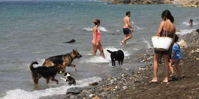 Perros en Málaga