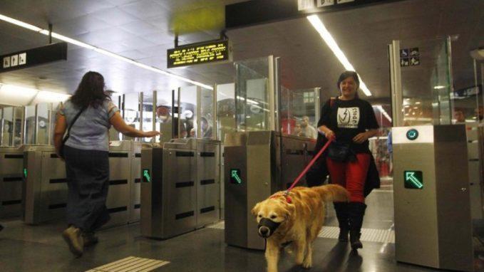 viajar en tren con perros