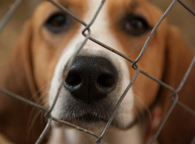 adoptar perro en una perrera -¿Por qué muerde un perro?