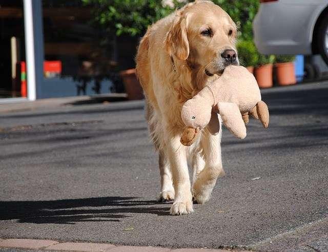 Qué hacer si tu perro se pierde