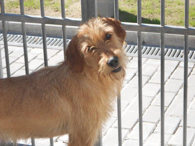Centro protección animal ayuntamiento madrid