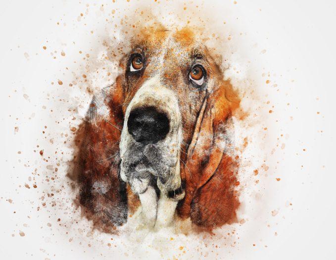 Nombre para perros