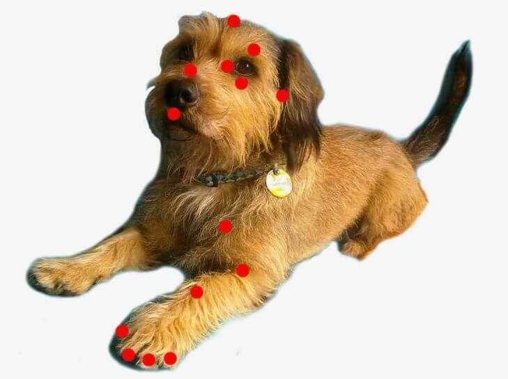 puntos-tapping-perros