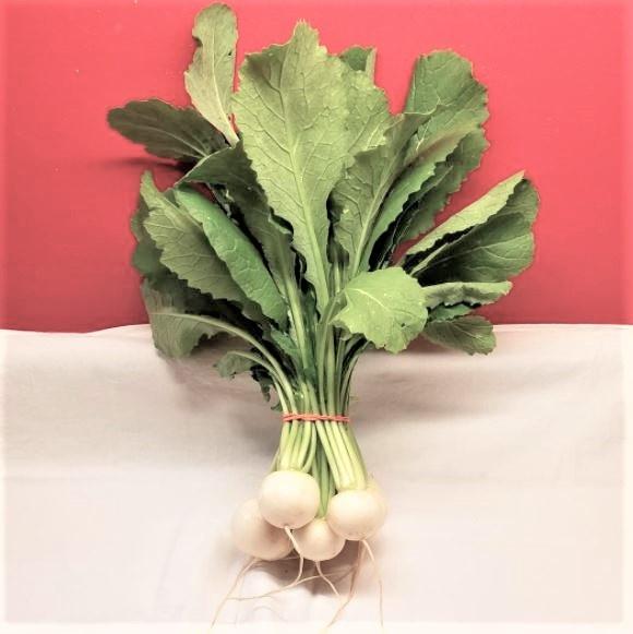 Salad Turnips