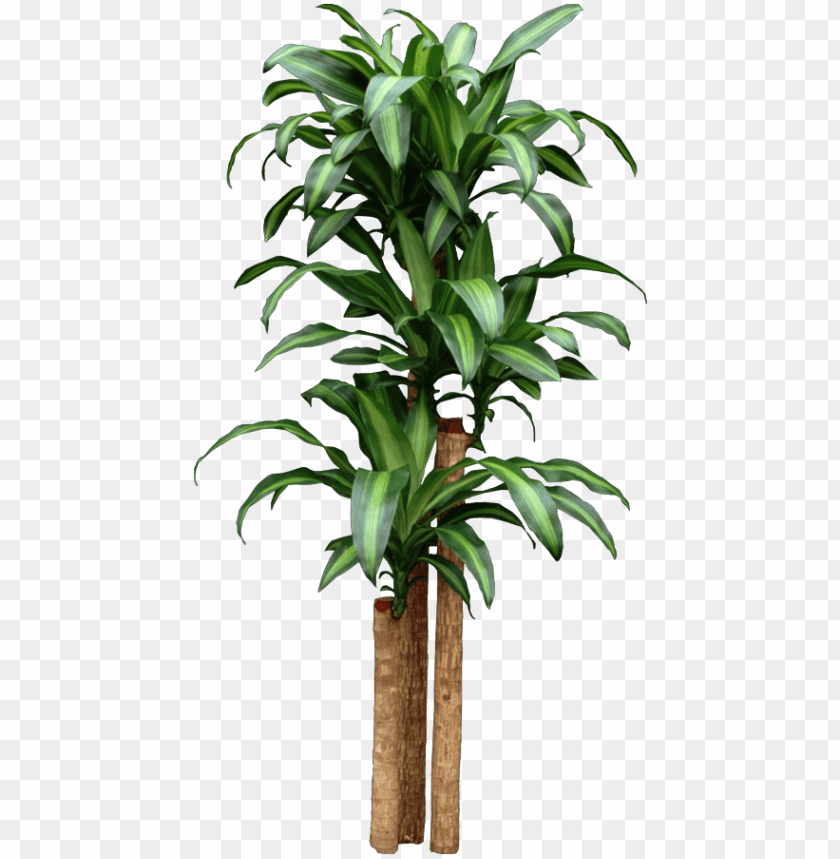 Corn Dracaena Getting Too Tall Start New Plants By Home Depot Tropical House Plants Png Image With Transparent Background Toppng