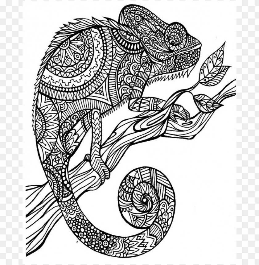 A Color Of His Own Chameleon Coloring Page Png Image With Transparent Background Toppng