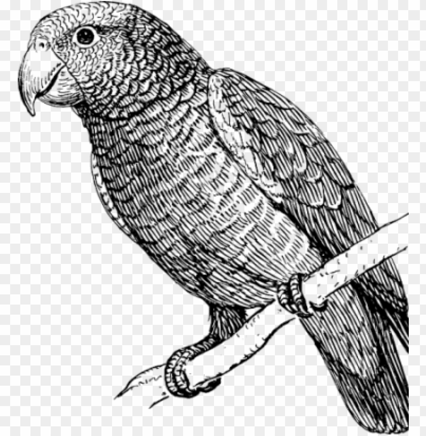 Clipart Freeuse Stock How To Draw A Parrot Art Instructions Parrot Bird Black And White Png Image With Transparent Background Toppng