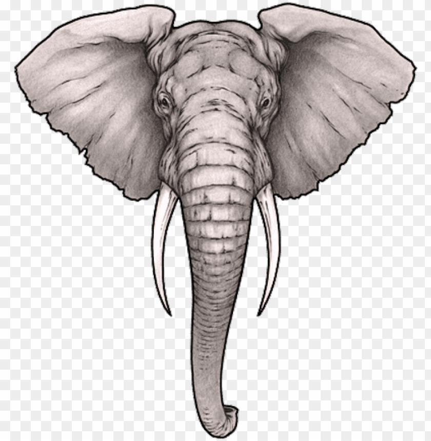 Realistic Elephant Face Drawing Png Image With Transparent Background Toppng