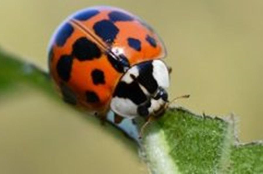 Инсекти који на глави имају шару у облику слова W или М, окупирали Србију: Требало је да убије ваши, а онда постала проблем