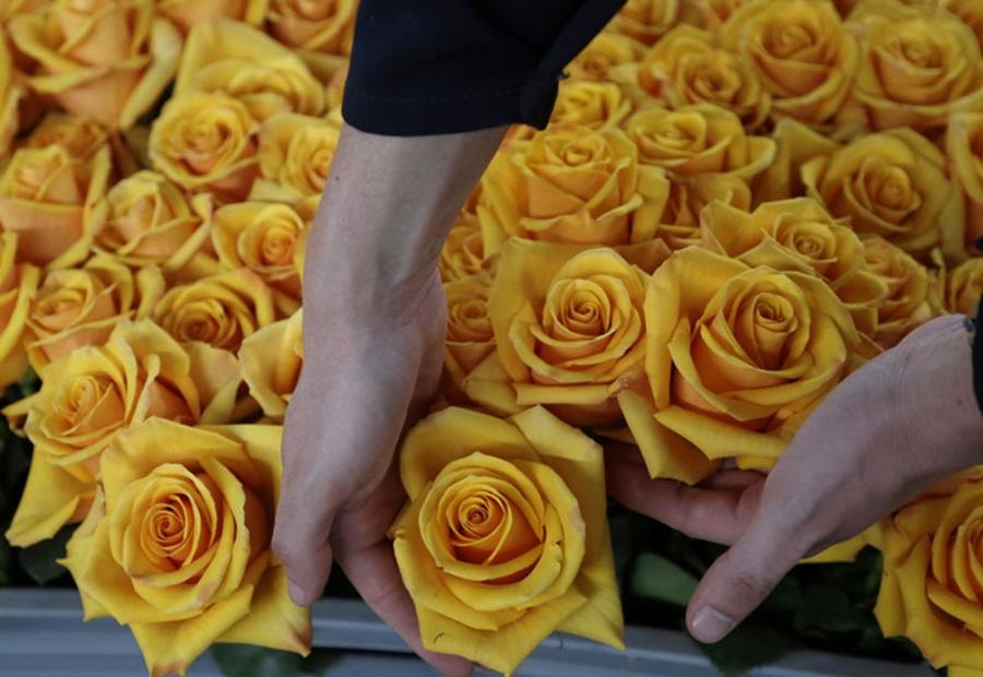 Симболика цвећа: Шта вам поручује мушкарац ако вам поклони ОВО цвеће