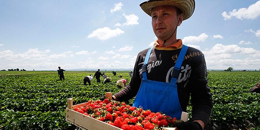 Младима на селу 12.600 евра. Обезбеђен новац за почетнике у пољопривреди