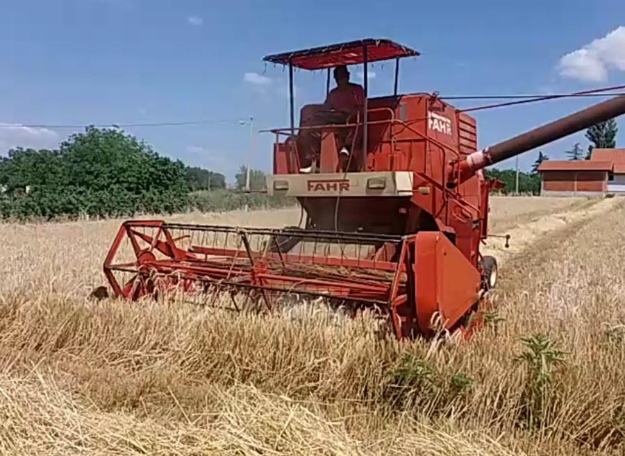 Жетва пшенице касни, принос и квалитет далеко од очекивања