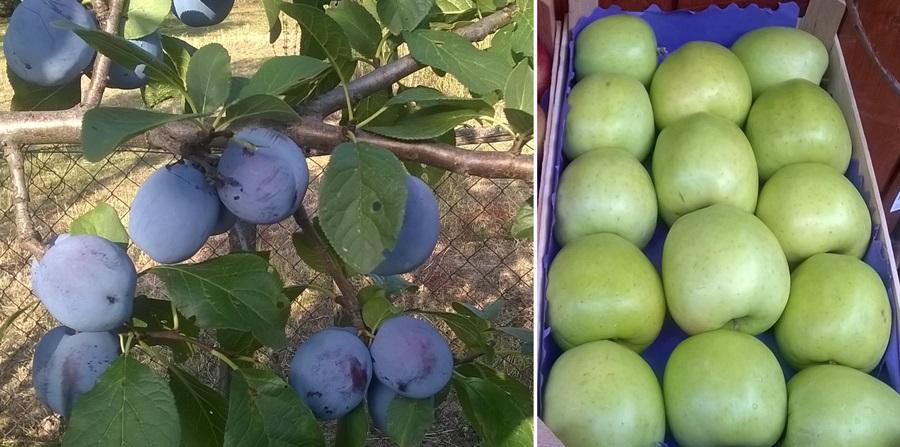 Срби највише гаје шљиву иако је јабука најбоље родила