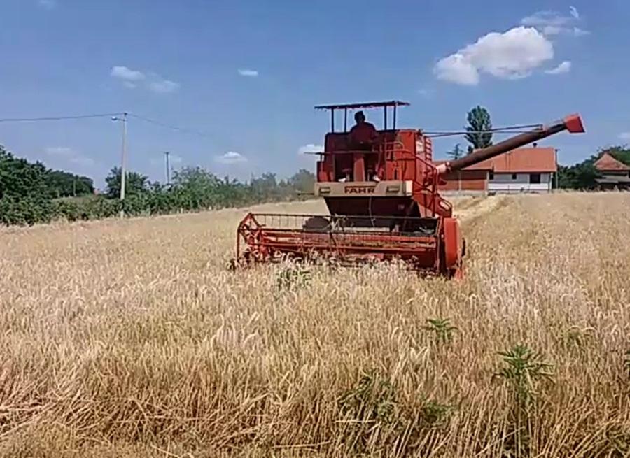 Цена хлеба још одолева, пшеница од летос поскупела за 30 одсто