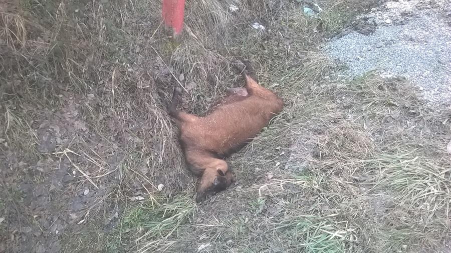 Неодговорни власник бацио угинулу животињу поред пута