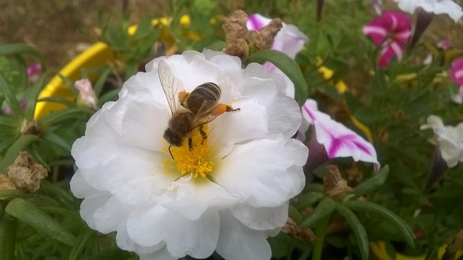 Креће акција заштите пчела од тровања опасним матаријама, биће велике казне