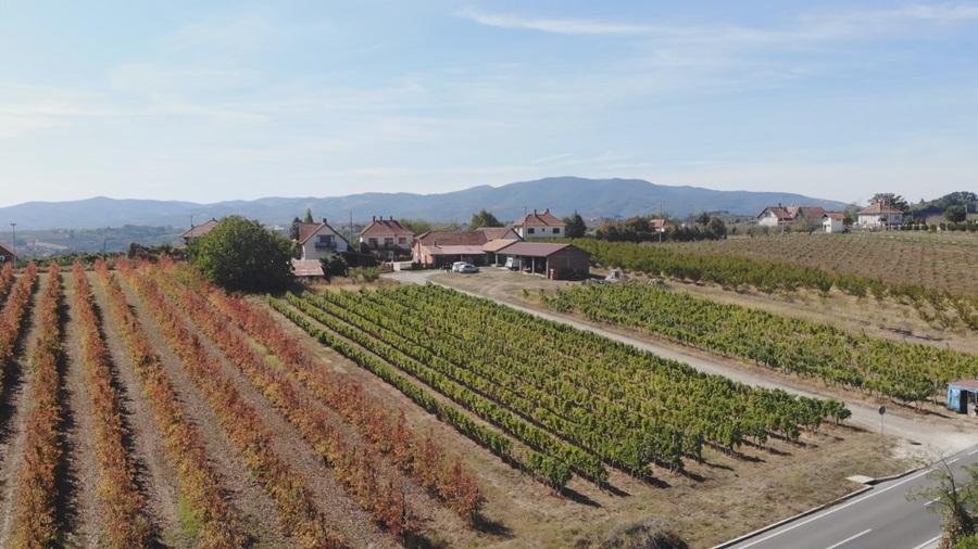 Све више винарија у Опленачком крају: вински туризам једна од најпросперитетнијих  грана општине Топола