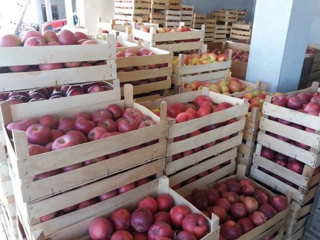 Извоз воћа и поврћа у ЕУ још пет година без царина