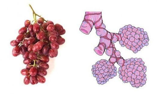 Imagini pentru struguri seamana cu organele