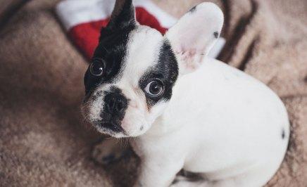 blog6-dog