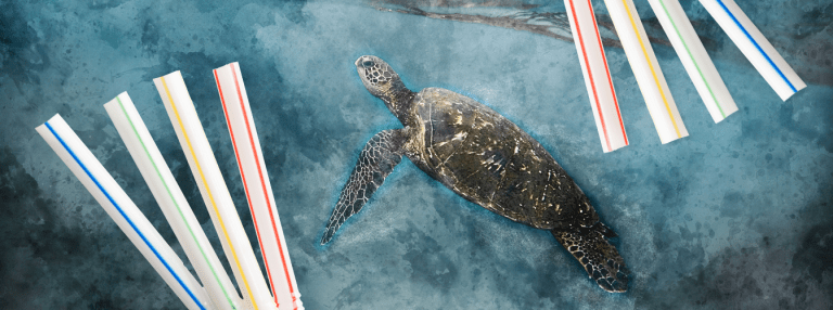What are the alternatives to plastic straws