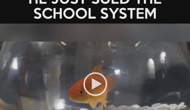 School System…