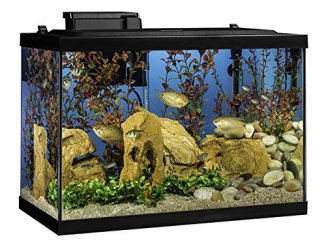 the top 10 best fish tank for home or office use