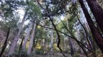 1 Muir Woods Rd, Mill Valley, CA 94941