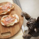 can cats eat cooked salmon