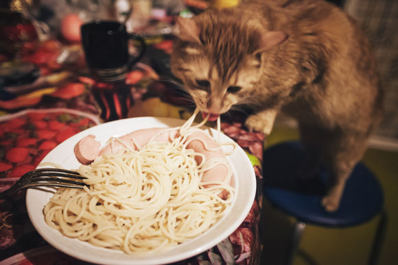 Can Cats Eat Noodles