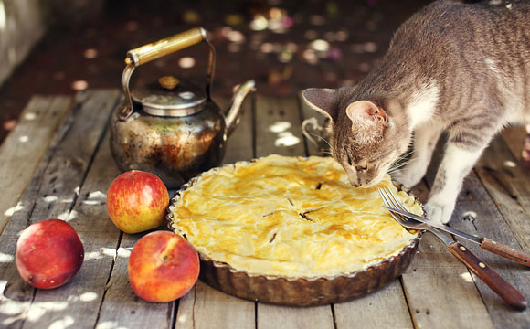 benefits of peaches for cats