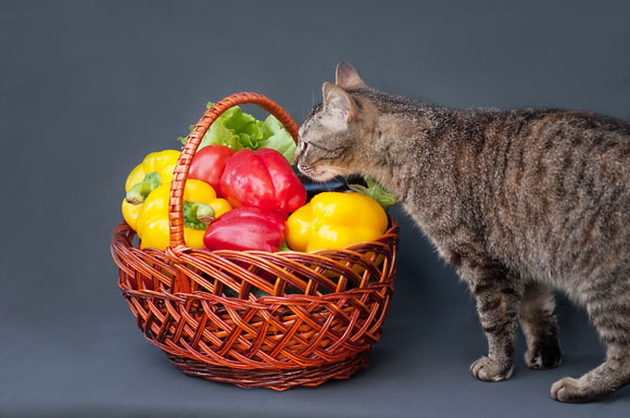 can cats eat bell peppers