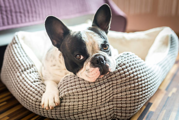 dog euthanasia at home