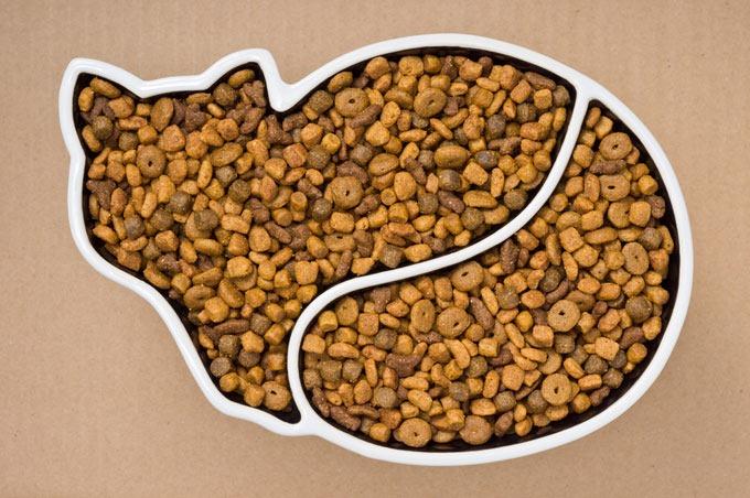 proper diet of an adult cat