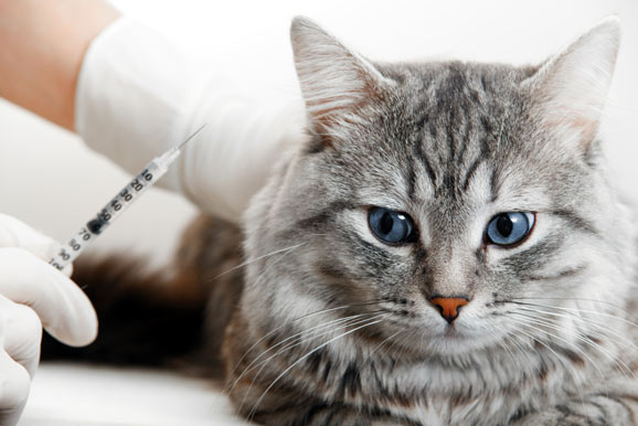 when to use penicillin on cats