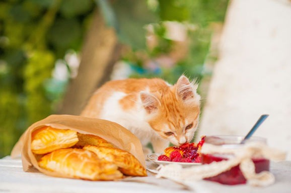 are-raspberries-safe-for-cats