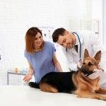 German-Shepherd-vet-expenses