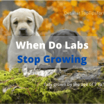 When Do Labs Stop Growing