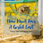 How Much Does A Gerbil Cost