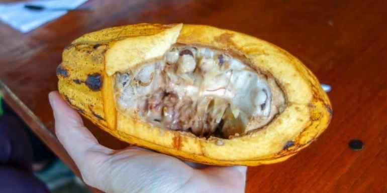 Cocoa, typical food in Ecuador