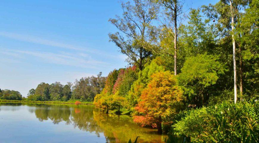 Parque Witeck – o maior bosque particular do RS
