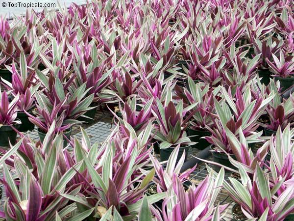Above Ground Herb Garden
