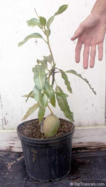 Tropical Garden Contest 2004
