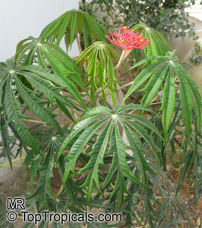 Exotic Plants Sale